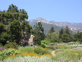 Santa Barbara Botanic Garden in Mission Canyon
