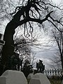 SUCHORABA cmentarz 376 (38).JPG