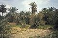 Sahara1984-11 hg.jpg