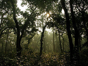 Himalayan subtropical broadleaf forests - Sal forest in Chitwan National Park