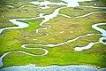 Salt marsh, Core Banks.jpg