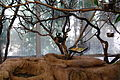 San Diego Zoo Safari Park 58 2014-08-29.JPG