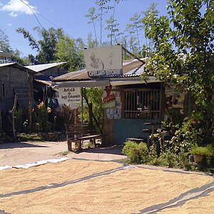 Ilocos Sur - Rice grains being dried on a road in San Esteban.