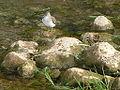 Sandpiper 1040502 n.jpg