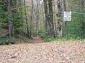 Sap lines crossing old road - panoramio.jpg