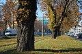 Sarajevo Tram-Line Hotel-Bristol 2011-10-19 (2).jpg