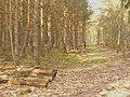 Schwarze Berge - Waldweg (Forest Track) - geo.hlipp.de - 34921.jpg