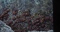 Seaweed. Mathewtown. Inagua (24998875388).jpg