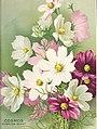 Seed annual 1918 (1918) (14784548513).jpg