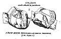 Segell-ramon-berenguer-IV-provença-1178-anvers-revers-blancard-pl2-2.jpg