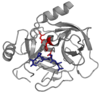 Serpin and protease.png
