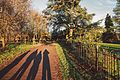 Shadows in Nonsuch Park, Surrey.jpg