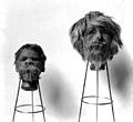 Shrunken heads. Wellcome M0016729.jpg