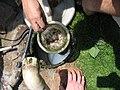 Sieve for greywater pump (2946284261).jpg