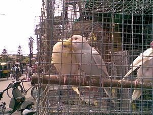 Local pet shops of Siliguri