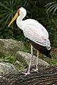 Singapore Bird Park-25and (2928406590).jpg