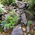 Sinharaja Rain Forest, Sri Lanka - panoramio (12).jpg