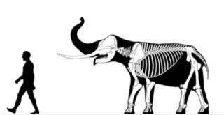 <i>Sinomastodon</i> genus of mammals (fossil)