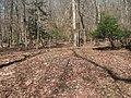 Site of ruins, site of Lexington plantation.jpg