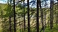 Skuleskogen 20170628 a18.jpg