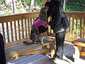 Sled Dog Discovery & Musher's Camp 32.jpg