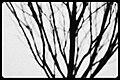 Small Tree Shadow (8463625466).jpg