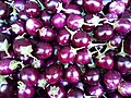 Small round eggplants 2017 A.jpg