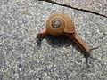 Snail 3.jpg