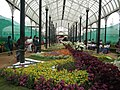 Snap from Lalbagh Flower Show Aug 2013 8364.JPG