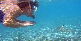 A snorkeler on the left looks at a small nearby shark, which is swimming away