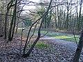 South Staffordshire Railway Walk, Himley - geograph.org.uk - 632977.jpg