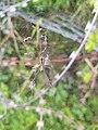 Spider20170820 122718.jpg