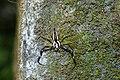 Spider 2562.jpg