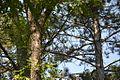 Spomen park Bubanj - Niš 23.jpg