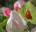 Spring at Silk Weavers Way (26757032202).jpg