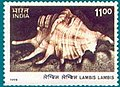Stamp of India - 1998 - Colnect 161903 - Spider Conch Lambis lambis.jpeg