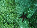 Starfish deep down.jpg