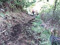 Starr-170304-7135-Rubus niveus-Forest on trail with pig digging damage-Boundary Trail Polipoli-Maui (33255153641).jpg