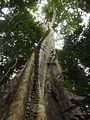 Sulawesi trsr DSCN0315.JPG