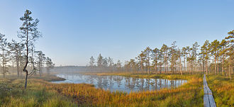 Wetland - Sunrise at Viru Bog, Estonia