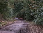 Sutton Park Path.jpg