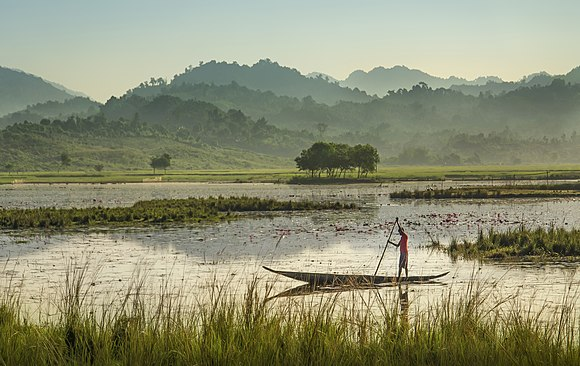 Swamp Sylhet.jpg
