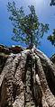 Ta Phrom, Angkor, Camboya, 2013-08-16, DD 33.JPG