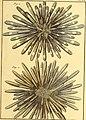 Tableau encyclopédique et méthodique des trois règnes de la nature (1791) (14581565719).jpg