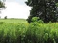 Tallgrass Prairie 2016-07-12 1459.jpg