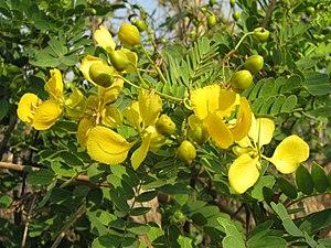 Telangana - Tangedu Puvvu