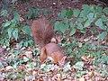 Tarnow Park Strzelecki wiewiorka 2.jpg
