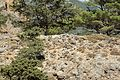 Tarra, remains of Hellenistic town, Agia Roumeli, Crete, 145554.jpg