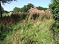 Teasels by the footpath at Skendleby - geograph.org.uk - 554219.jpg