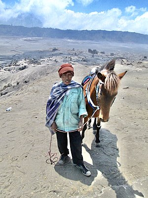 Tenggerese people - Image: Tenggerese tribe pony owners at Mt Bromo